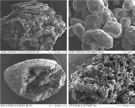 Scanning electron micrograph photographs of various shot-coke types.