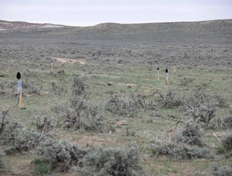 Sage-grouse lek wired for sound monitoring.