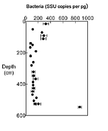 Results of quantitative PCR analysis - genes from bacteria and archaea from a Arctic sediment core (PC13).  The abundance of these genes is roughly the same as the abundance of the organisms.