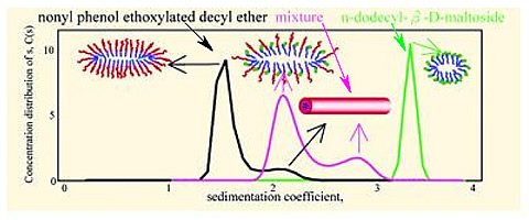 Sedimentation coefficient of dilute mixed solution of n-dodecyl-b-D-maltoside (DM) and nonyl phenol ethoxylated decyl ether (NP-10) by analytical ultracentrifugation (AUC): Coexistence of mixed micelle species.